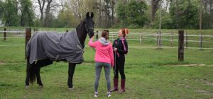 Teambuilding s konji Natalie C. Postružnik